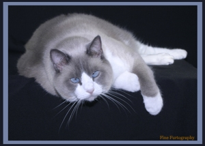 Who can resist an adorable kitty like Kline?